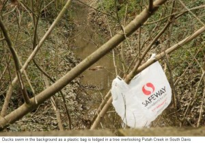 Commentary: Reusing Plastic Bags