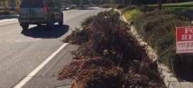 We Need To Rid Our Bike Lanes Of All Green Waste