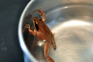 frog-boiling-water