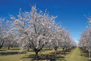 Lawns versus Almonds – Can't We All Just Get Along?