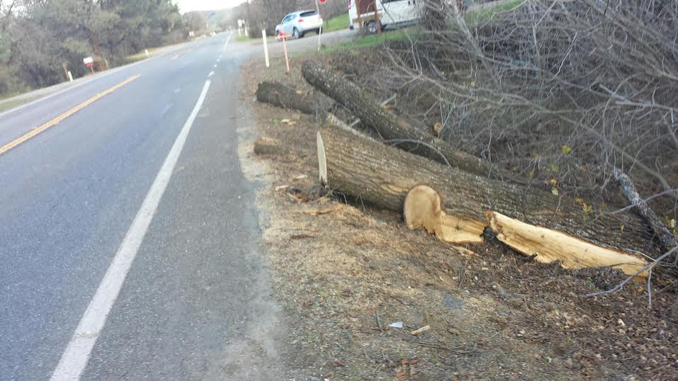 Taken later, the remnants of the tree cleared to the side of the road