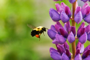 The Life that Sustains Us – Flying on the Wings of Pollinators