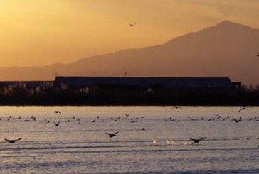 Reconsidering the Delta Tunnels
