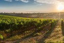 Prime Farmland In Yolo County Conserved for Agriculture