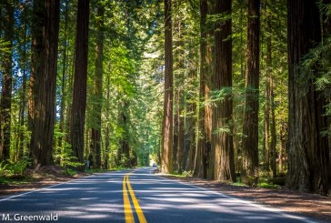 Forests Get the Short End of the State Climate Funding Stick