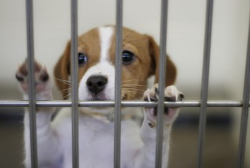 A Letter to Yolo County's Animal Loving Population