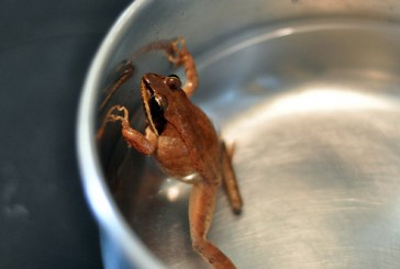 Guest Commentary: Boiling the Frog
