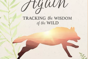 """Dawn Again"" – A Book to Bring Life to Your Holiday Selection"