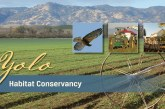 The Yolo County Habitat Conservancy – A Long and Expensive Journey