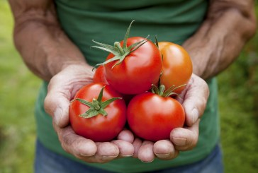 """Guest Commentary: Make """"Sustainable Food"""" the Economic Engine of Downtown Davis"""