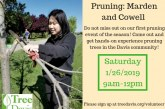 Pruning on Saturday Jan 26 in Davis