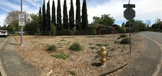 https://www.davisvanguard.org/wp-content/uploads/2019/04/Drought-Tolerant-Planting-on-Cowell-Blvd-2-e1555946973876.jpeg