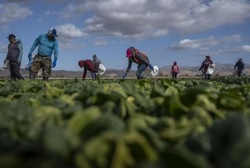 UC Davis Western Center for Agricultural Health and Safety Spotlights Harsh Truths of Health Issues Among Farmworkers
