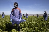 Over 73 Percent of Agriculture Workers in Yolo County Vaccinated
