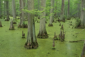 Student Opinion: Lakes And Swamps: The Overshadowed Key To Combating Climate Change