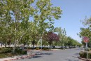 Letter: Tree Davis Position on Sutter Davis Hospital Tree Removal