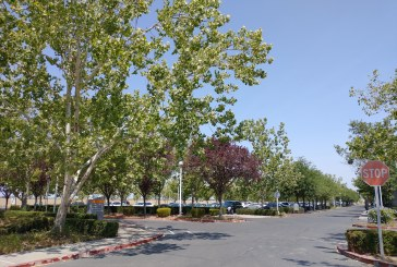 Council Rejects Hirsch Appeal; Follows Staff on Partial Grant of Sutter Appeal